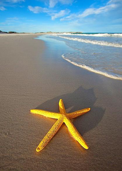yStarfish